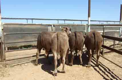 ANFD-steer-trial