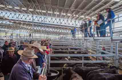 SELX-Store-Cattle-26-May