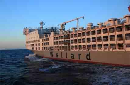 Wellard-7