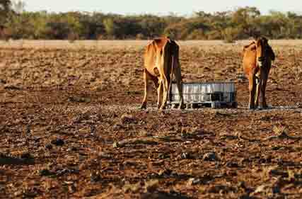 Qld-drought