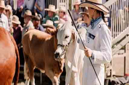 Commercial-cattle-classes