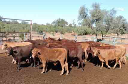 Santa-steers-Hungerford